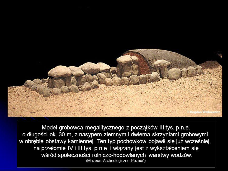 Model grobowca megalitycznego z początków III tys. p.n.e. o długości ok. 30 m, z nasypem ziemnym i dwiema skrzyniami grobowymi w obrębie obstawy kamie