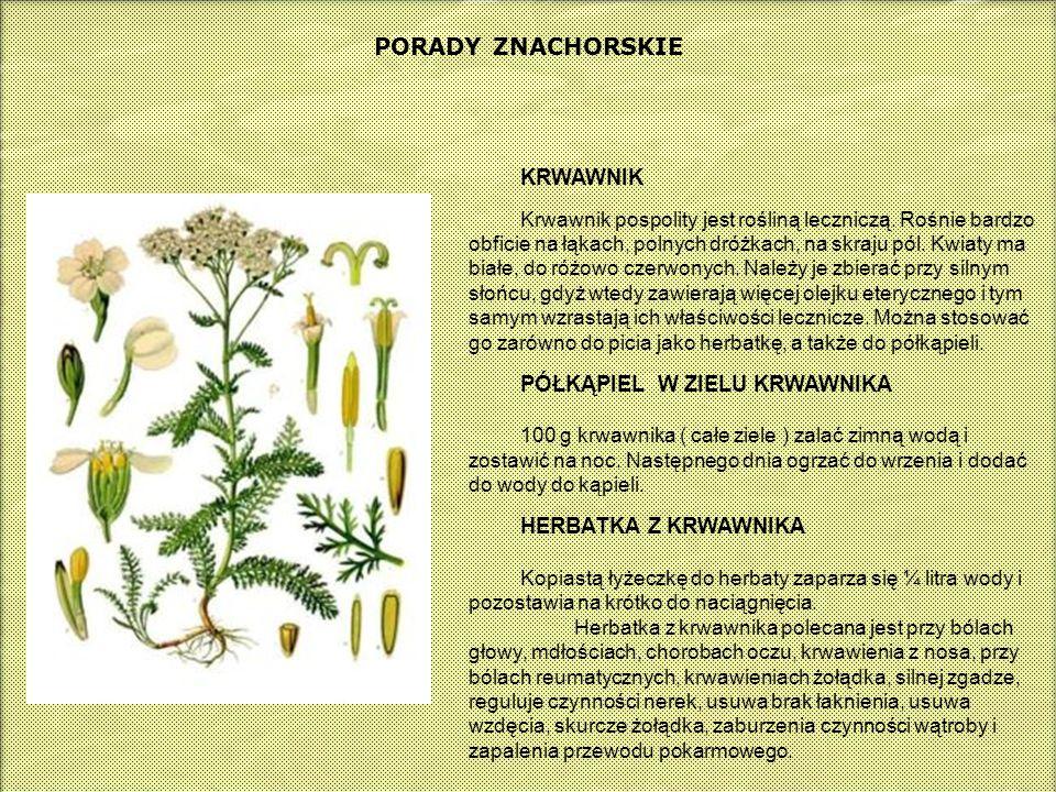 PORADY ZNACHORSKIE KRWAWNIK Krwawnik pospolity jest rośliną leczniczą. Rośnie bardzo obficie na łąkach, polnych dróżkach, na skraju pól. Kwiaty ma bia