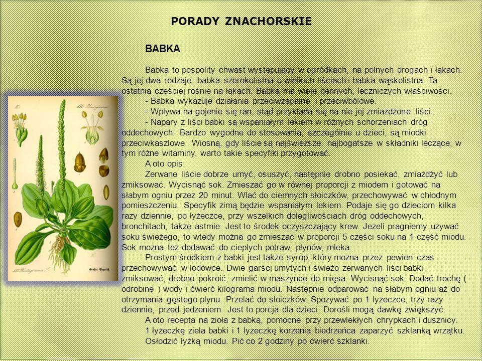 PORADY ZNACHORSKIE BABKA Babka to pospolity chwast występujący w ogródkach, na polnych drogach i łąkach. Są jej dwa rodzaje: babka szerokolistna o wie