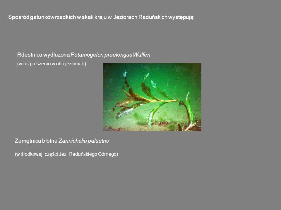 Flora Jezior Raduńskich jest stosunkowo bogata.