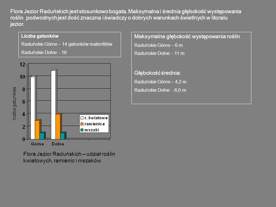 J.Łączyńskie J. Nierzostowo Zróżnicowanie przestrzenne roślinności obu jezior jest dość znaczne.
