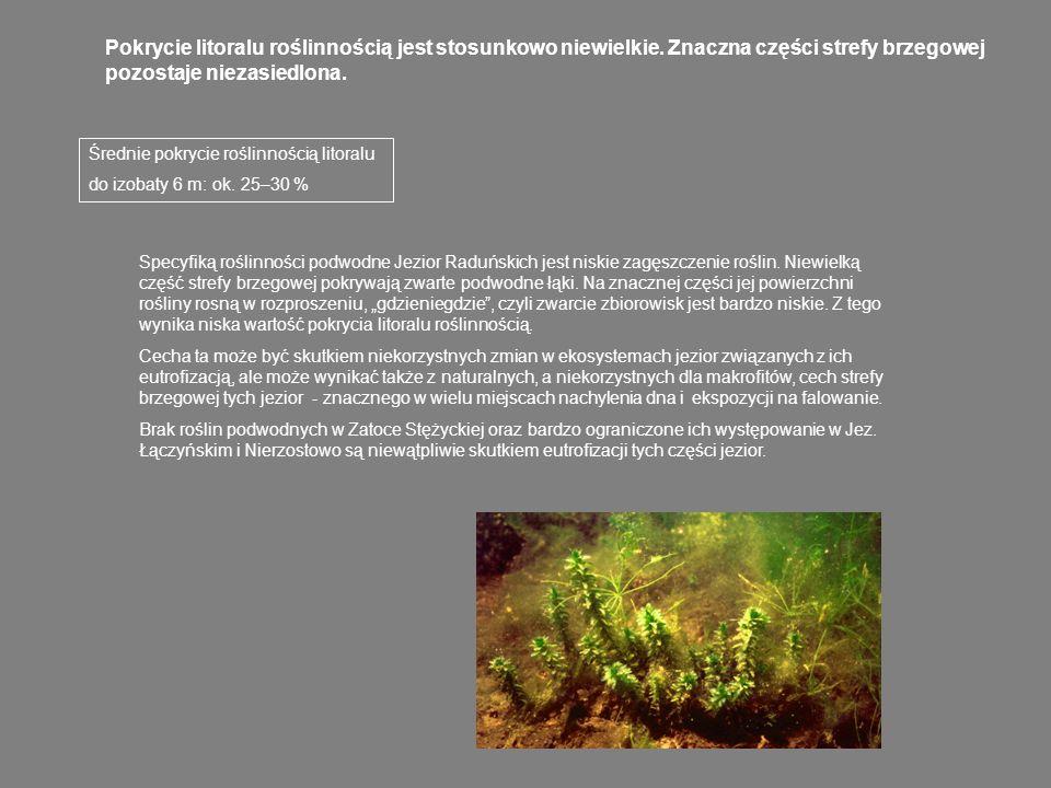 Ocena stanu ekologicznego jezior Raduńskiego Górnego i Dolnego metodą makrofitoindykacji (Rejewski 1981, Ciecierska 2004) Makrofitowy wskaźnik stanu ekologicznego (MWSE) dla obu jezior wynosi ok.