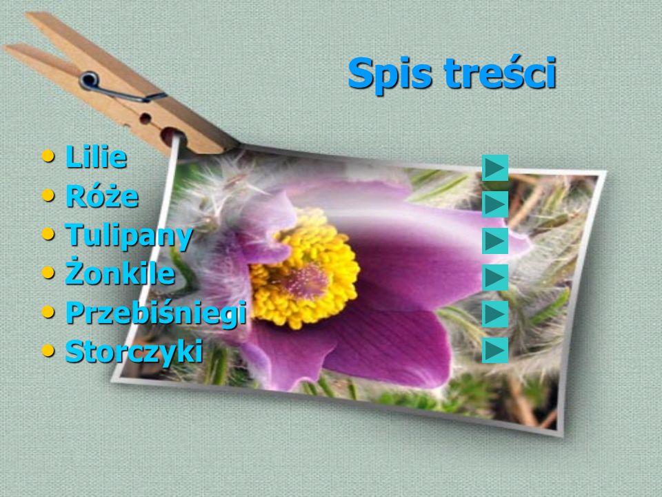 Spis treści Spis treści Lilie Lilie Róże Róże Tulipany Tulipany Żonkile Żonkile Przebiśniegi Przebiśniegi Storczyki Storczyki