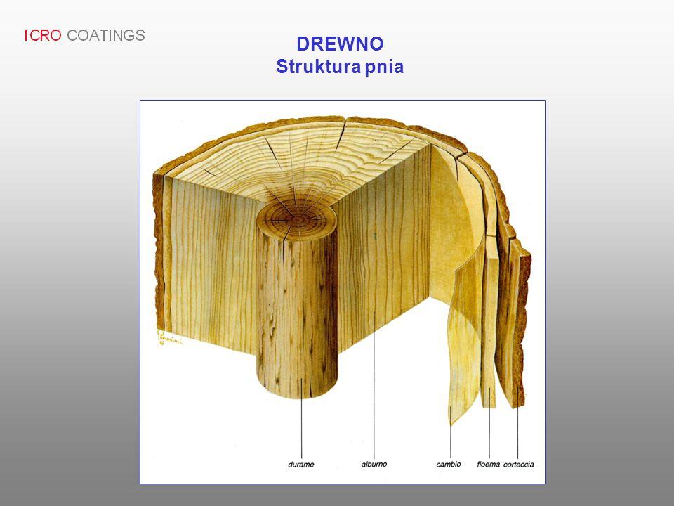 DREWNO Struktura pnia