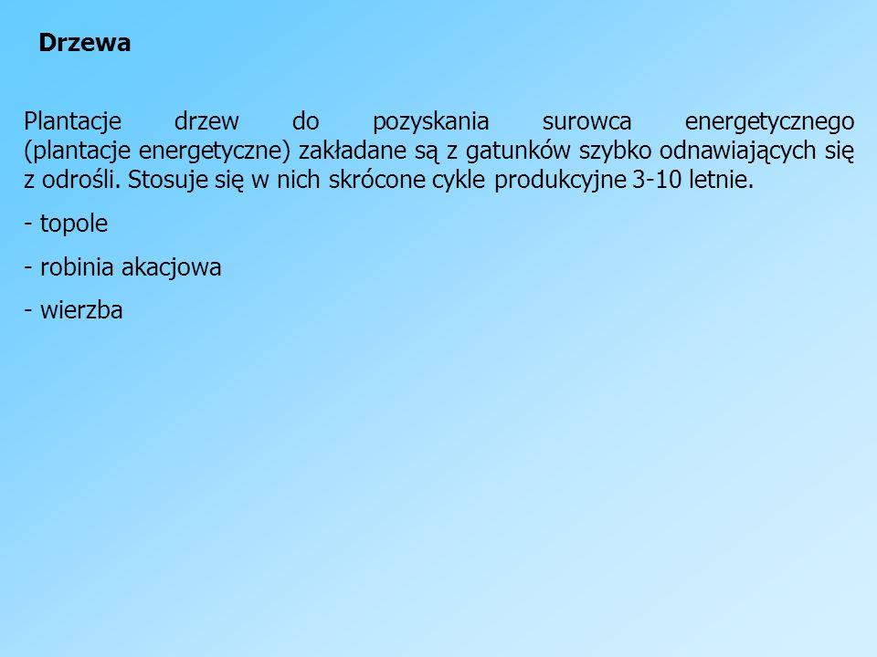Rośliny energetyczne niezdrewniałe - buraki - kukurydza - topinambur - trawy - spartina preriowa - miskant olbrzymi - miskant cukrowy - ślazowiec pensylwański