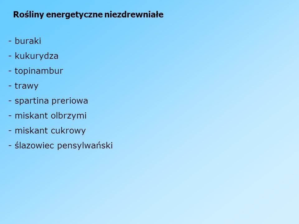 Rośliny energetyczne niezdrewniałe - buraki - kukurydza - topinambur - trawy - spartina preriowa - miskant olbrzymi - miskant cukrowy - ślazowiec pens