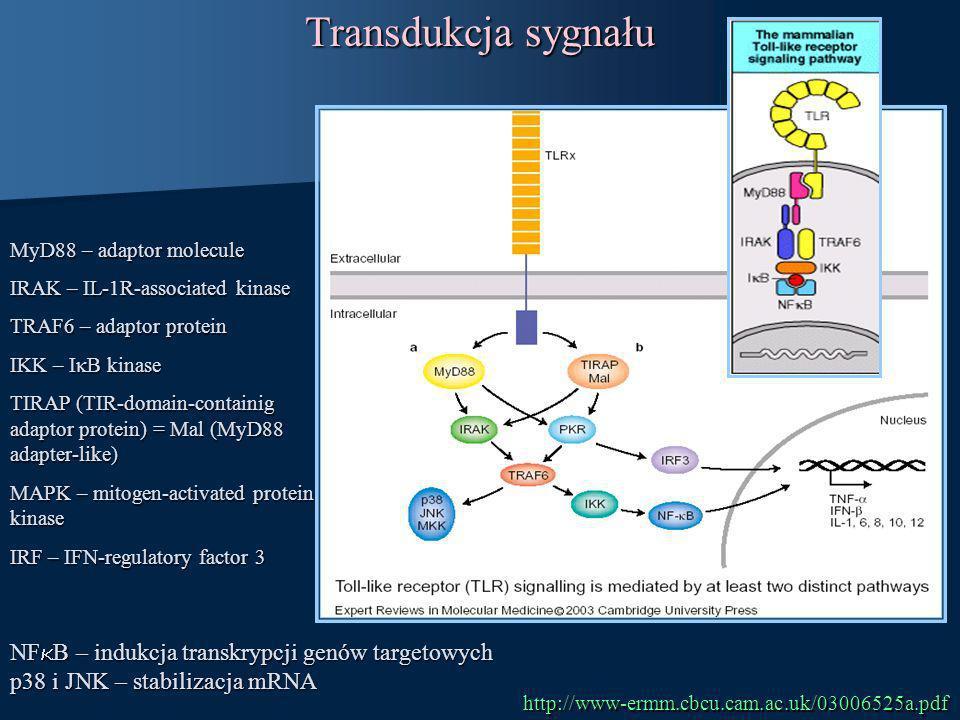 Transdukcja sygnału MyD88 – adaptor molecule IRAK – IL-1R-associated kinase TRAF6 – adaptor protein IKK – I B kinase TIRAP (TIR-domain-containig adapt