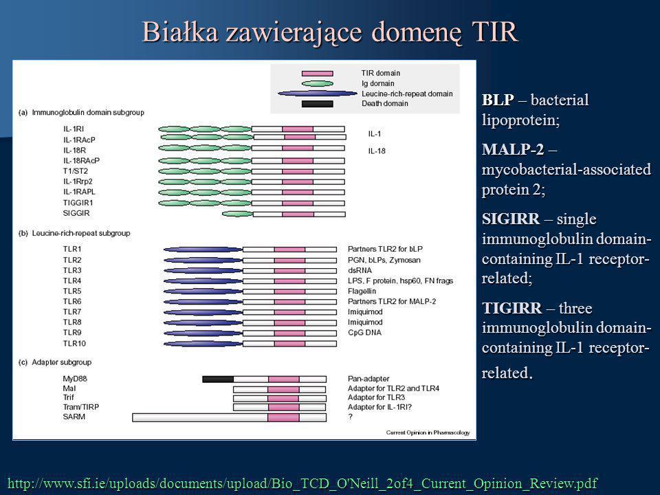 Białka zawierające domenę TIR BLP – bacterial lipoprotein; MALP-2 – mycobacterial-associated protein 2; SIGIRR – single immunoglobulin domain- contain