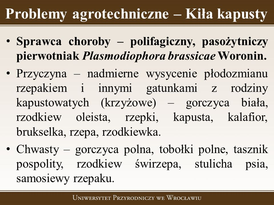 Problemy agrotechniczne – Kiła kapusty Sprawca choroby – polifagiczny, pasożytniczy pierwotniak Plasmodiophora brassicae Woronin. Przyczyna – nadmiern