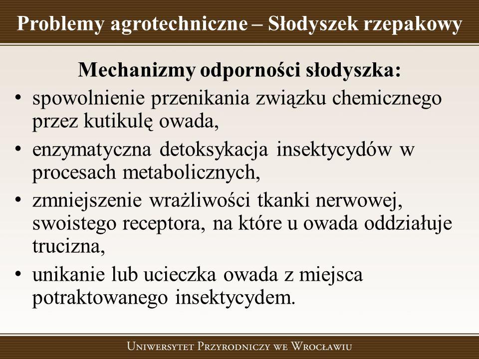 Problemy agrotechniczne – Słodyszek rzepakowy Mechanizmy odporności słodyszka: spowolnienie przenikania związku chemicznego przez kutikulę owada, enzy