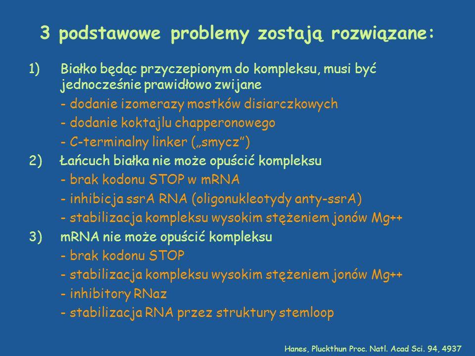 3 podstawowe problemy zostają rozwiązane: 1)Białko będąc przyczepionym do kompleksu, musi być jednocześnie prawidłowo zwijane - dodanie izomerazy most