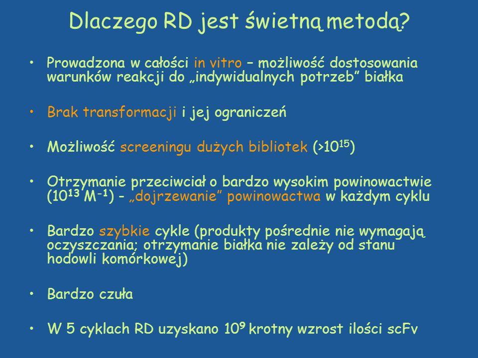 Dlaczego RD jest świetną metodą? Prowadzona w całości in vitro – możliwość dostosowania warunków reakcji do indywidualnych potrzeb białka Brak transfo