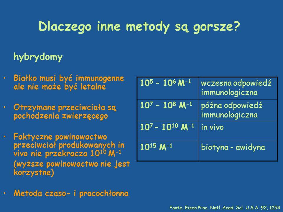 Dlaczego inne metody są gorsze? hybrydomy Białko musi być immunogenne ale nie może być letalne Otrzymane przeciwciała są pochodzenia zwierzęcego Fakty