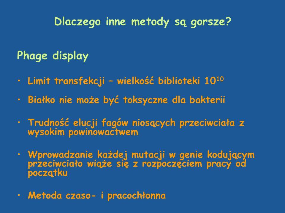Dlaczego inne metody są gorsze? Phage display Limit transfekcji – wielkość biblioteki 10 10 Białko nie może być toksyczne dla bakterii Trudność elucji