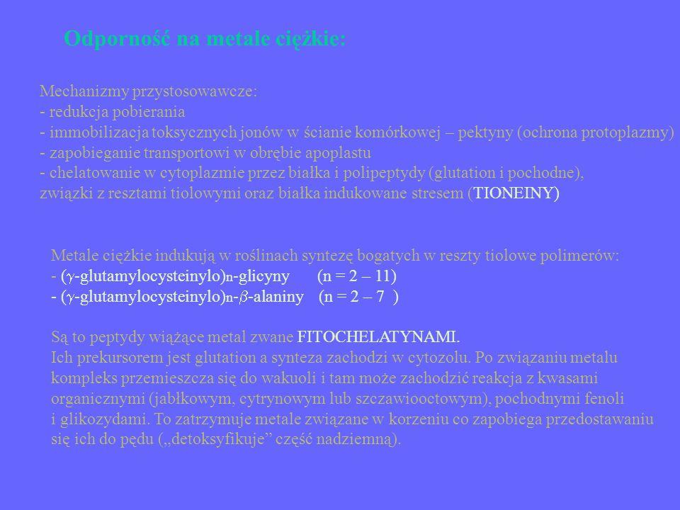 Odporność na metale ciężkie: Mechanizmy przystosowawcze: - redukcja pobierania - immobilizacja toksycznych jonów w ścianie komórkowej – pektyny (ochro