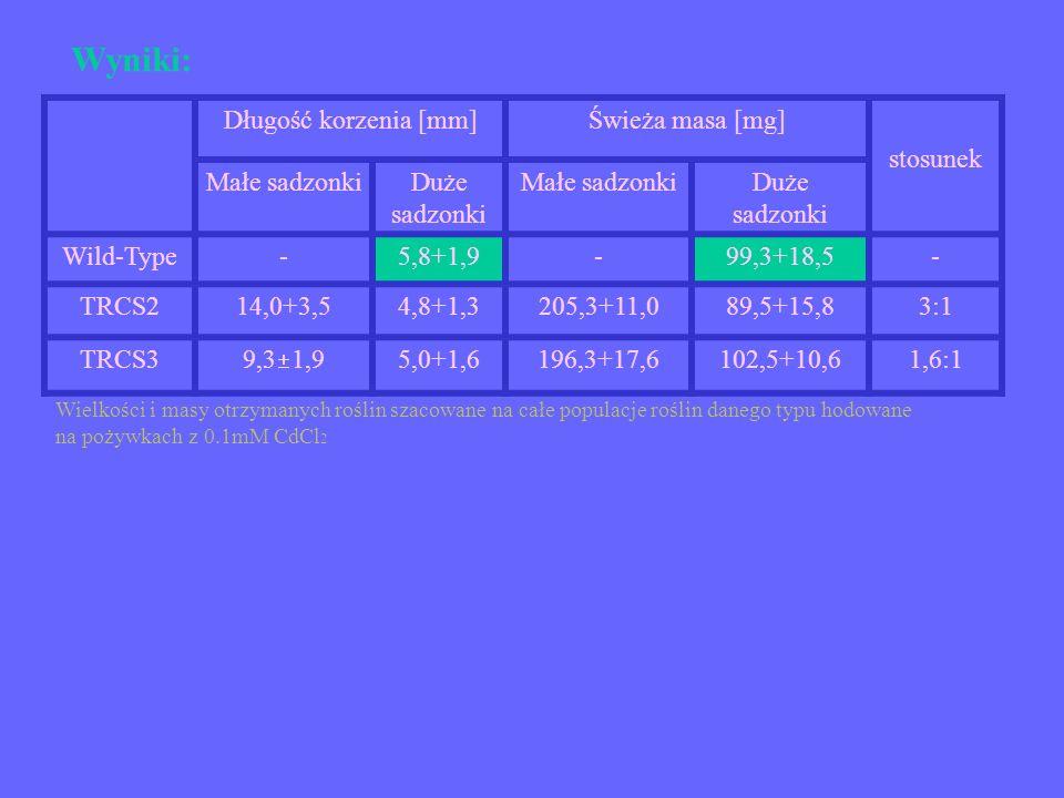 Wyniki: Długość korzenia [mm]Świeża masa [mg] stosunek Małe sadzonkiDuże sadzonki Małe sadzonkiDuże sadzonki Wild-Type-5,8+1,9-99,3+18,5- TRCS214,0+3,