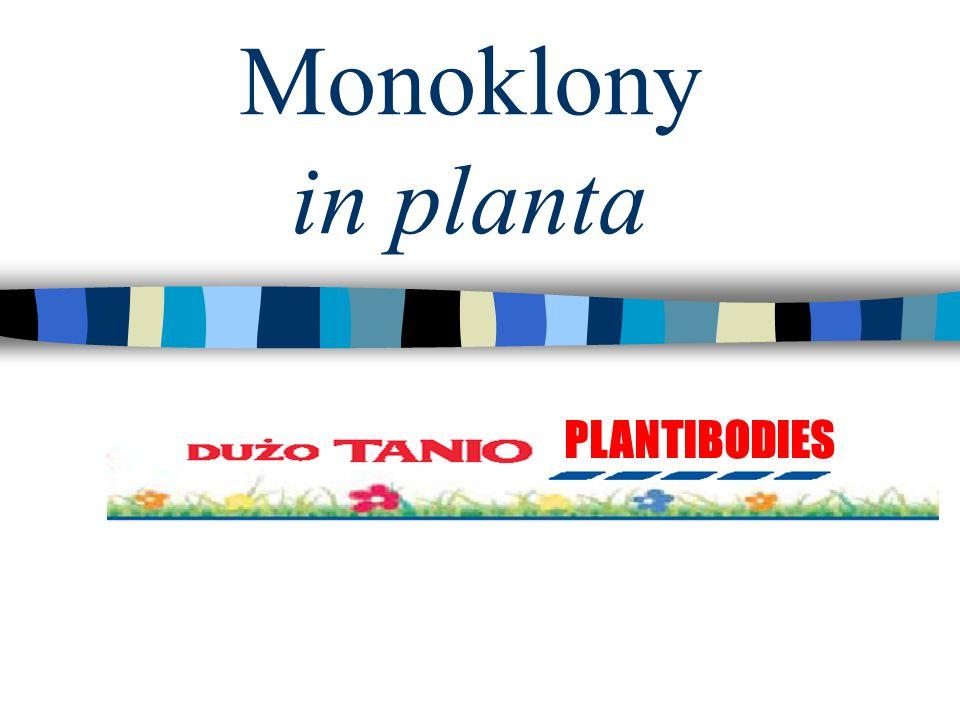 2 Cechy produkcji monoklonów w roślinach Przewiduje się wprowadzenie 25-50 nowych terapeutycznych mAb w ciągu 5 lat.