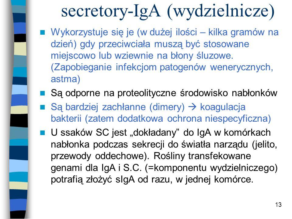 13 secretory-IgA (wydzielnicze) Wykorzystuje się je (w dużej ilości – kilka gramów na dzień) gdy przeciwciała muszą być stosowane miejscowo lub wziewn