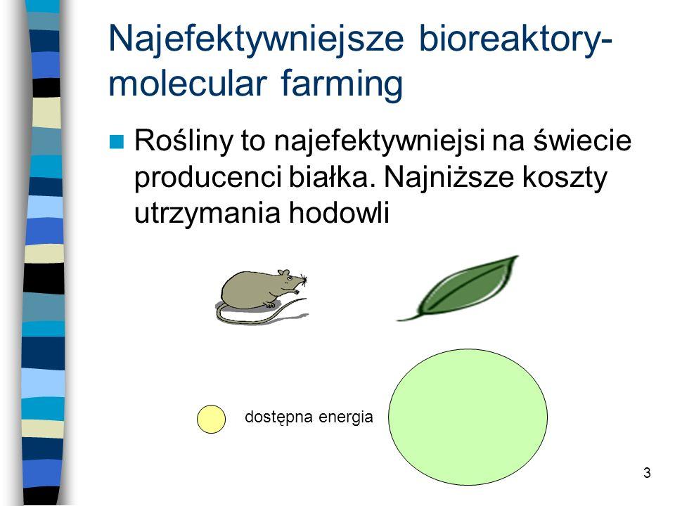 3 Najefektywniejsze bioreaktory- molecular farming Rośliny to najefektywniejsi na świecie producenci białka. Najniższe koszty utrzymania hodowli dostę