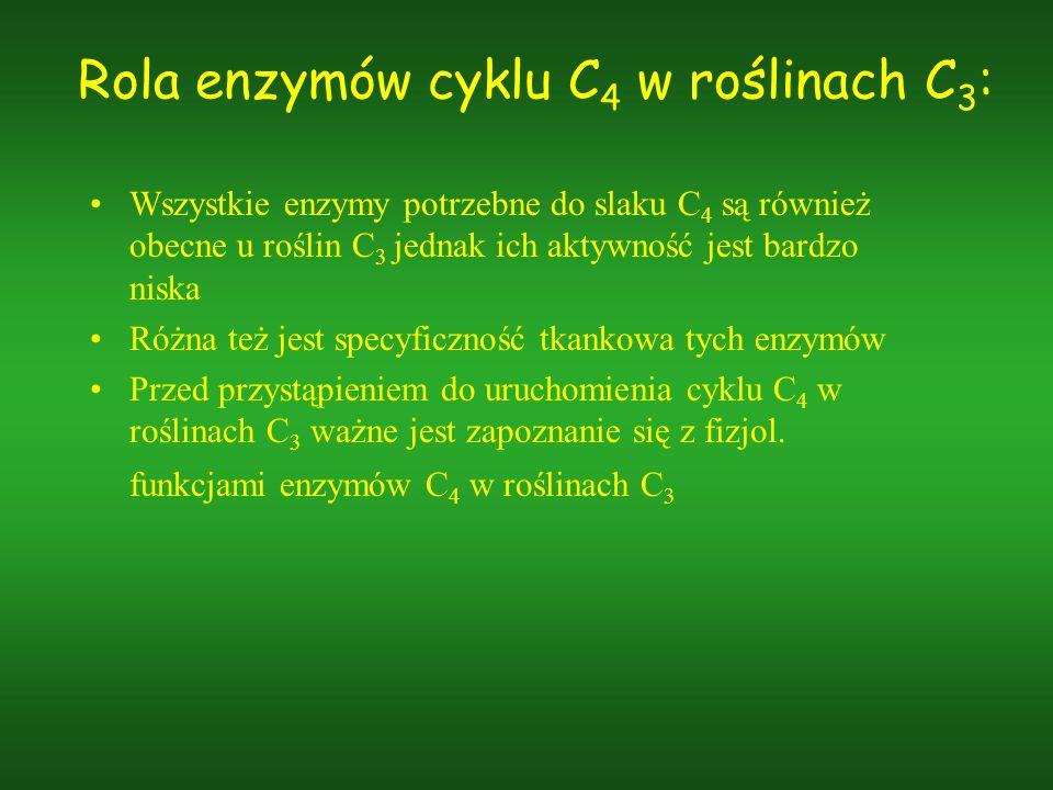 Rola enzymów cyklu C 4 w roślinach C 3 : Wszystkie enzymy potrzebne do slaku C 4 są również obecne u roślin C 3 jednak ich aktywność jest bardzo niska