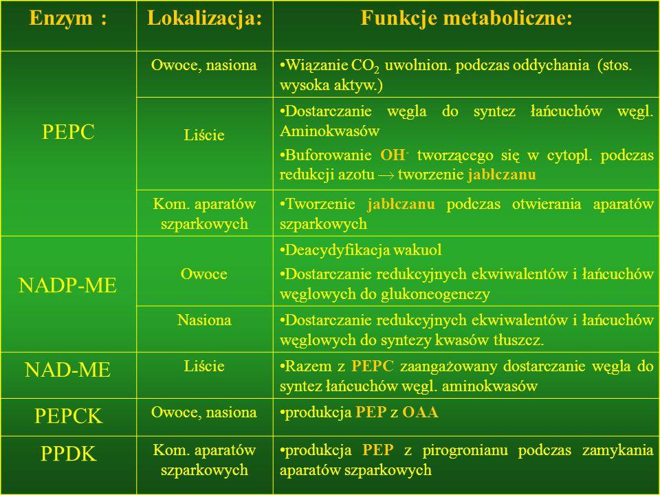 Enzym :Lokalizacja:Funkcje metaboliczne: PEPC Owoce, nasionaWiązanie CO 2 uwolnion. podczas oddychania (stos. wysoka aktyw.) Liście Dostarczanie węgla