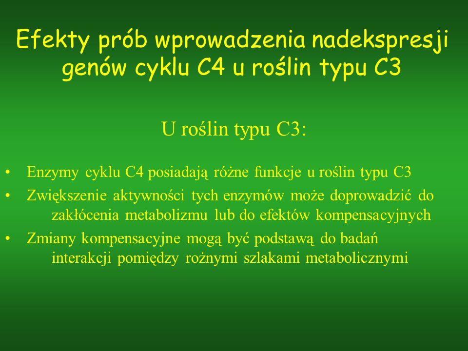 Efekty prób wprowadzenia nadekspresji genów cyklu C4 u roślin typu C3 U roślin typu C3: Enzymy cyklu C4 posiadają różne funkcje u roślin typu C3 Zwięk