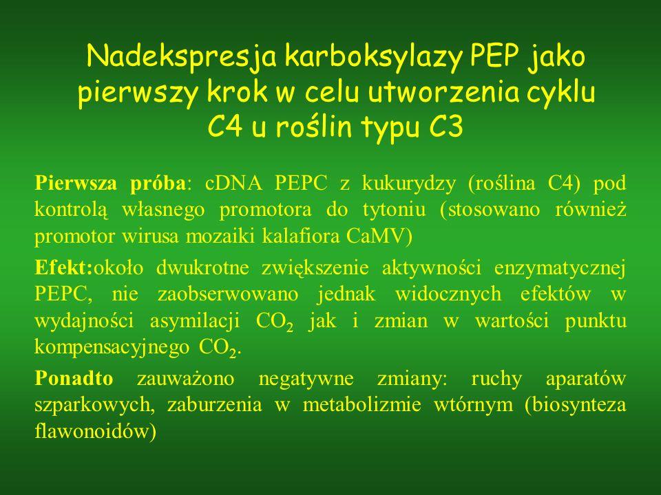 Nadekspresja karboksylazy PEP jako pierwszy krok w celu utworzenia cyklu C4 u roślin typu C3 Pierwsza próba: cDNA PEPC z kukurydzy (roślina C4) pod ko