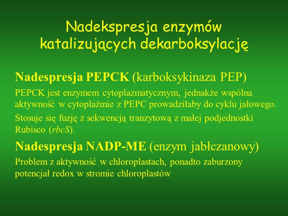 Nadekspresja enzymów katalizujących dekarboksylację Nadespresja PEPCK (karboksykinaza PEP) PEPCK jest enzymem cytoplazmatycznym, jednakże wspólna akty