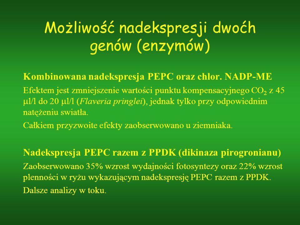 Możliwość nadekspresji dwoćh genów (enzymów) Kombinowana nadekspresja PEPC oraz chlor. NADP-ME Efektem jest zmniejszenie wartości punktu kompensacyjne