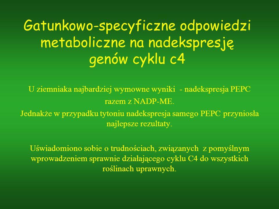 Gatunkowo-specyficzne odpowiedzi metaboliczne na nadekspresję genów cyklu c4 U ziemniaka najbardziej wymowne wyniki - nadekspresja PEPC razem z NADP-M