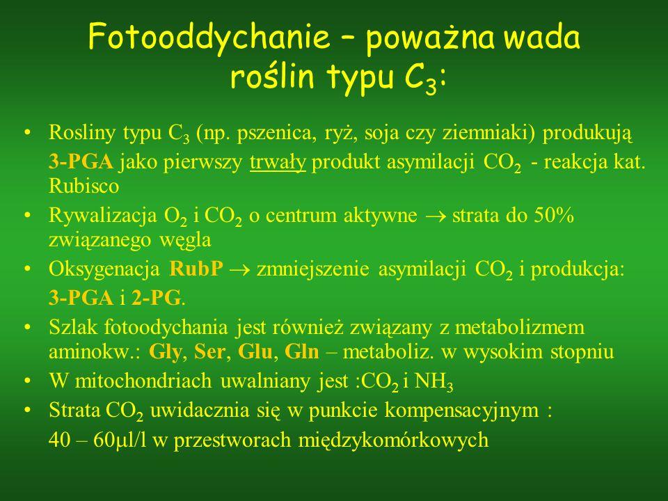 Fotooddychanie – poważna wada roślin typu C 3 : Rosliny typu C 3 (np. pszenica, ryż, soja czy ziemniaki) produkują 3-PGA jako pierwszy trwały produkt