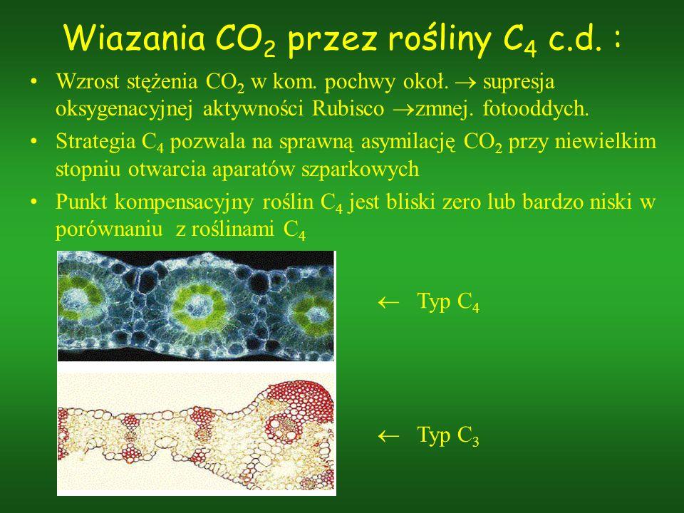 Wiazania CO 2 przez rośliny C 4 c.d. : Wzrost stężenia CO 2 w kom. pochwy okoł. supresja oksygenacyjnej aktywności Rubisco zmnej. fotooddych. Strategi