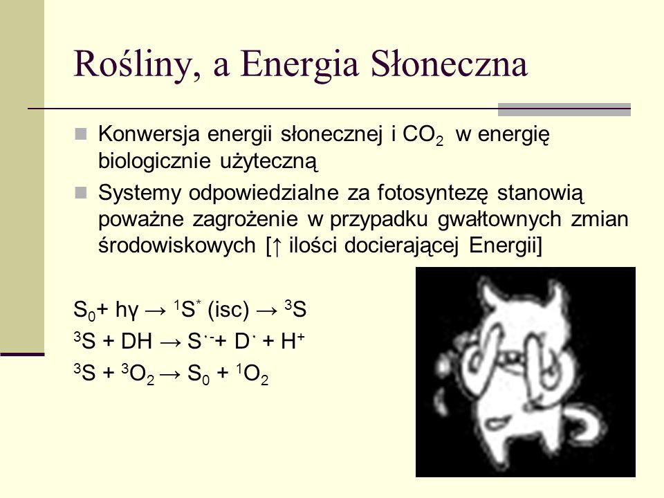 Rośliny, a świat zwierzęcy Tłuszczowe produkty pochodzenia roślinnego są zdolne do kontroli sygnalizacji międzykomórkowej i ekspresja genów [fitoestrogeny- flavonoidy służące do komunikacji z mikroflorą bakteryjną] Receptory hormonów sterydowych komórek ludzkich wywodzą się od receptorów bakteryjnych Ludzkie hormony sterydowe przypominają strukturalnie flavonoidy
