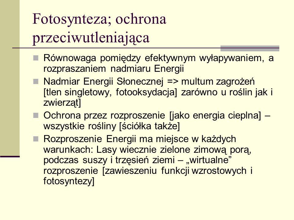 Anomalie Mutant [PsbS-] => Oksydacja lipidów w normie Podwójny mutant [zeaksantyna -, PsbS -] =>Wrażliwy na oksydację lipidów już w 20 0 C => α/γ-tokoferolu Wniosek: preferowany mechanizm przeciwdziałania stresowi świetlnemu: rozproszenie energii na drodze cieplnej