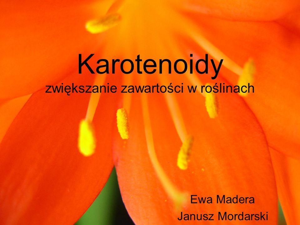 Karotenoidy zwiększanie zawartości w roślinach Ewa Madera Janusz Mordarski