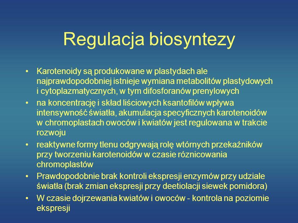 Regulacja biosyntezy Karotenoidy są produkowane w plastydach ale najprawdopodobniej istnieje wymiana metabolitów plastydowych i cytoplazmatycznych, w
