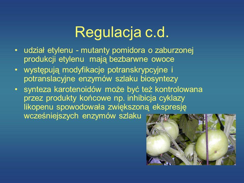 Regulacja c.d. udział etylenu - mutanty pomidora o zaburzonej produkcji etylenu mają bezbarwne owoce występują modyfikacje potranskrypcyjne i potransl