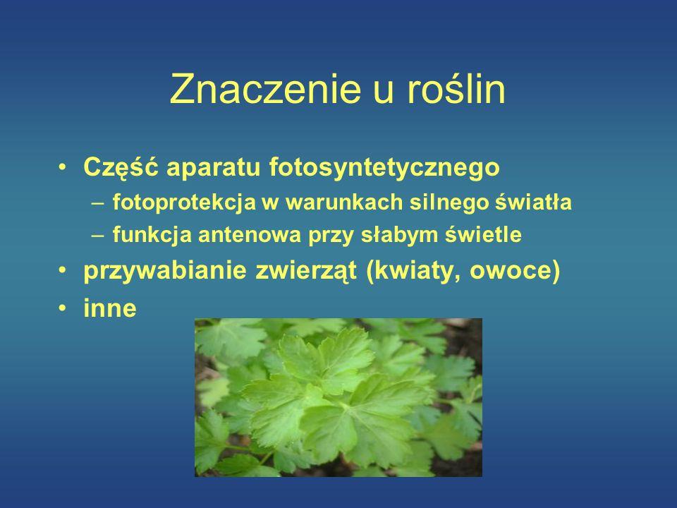 Znaczenie u roślin Część aparatu fotosyntetycznego –fotoprotekcja w warunkach silnego światła –funkcja antenowa przy słabym świetle przywabianie zwier