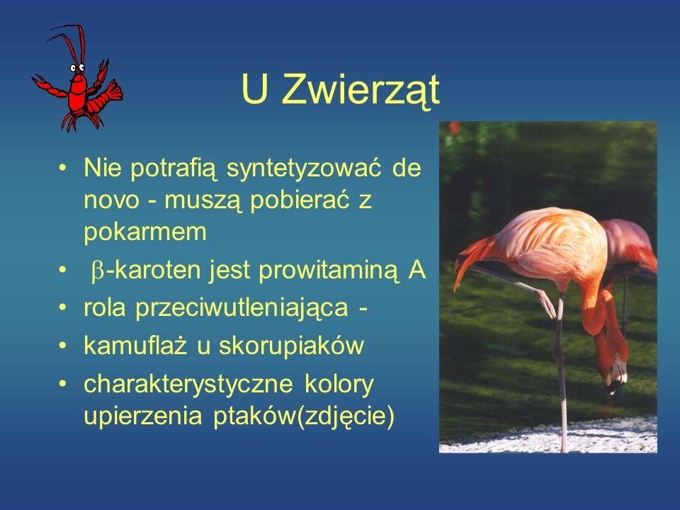 U Zwierząt Nie potrafią syntetyzować de novo - muszą pobierać z pokarmem -karoten jest prowitaminą A rola przeciwutleniająca - kamuflaż u skorupiaków