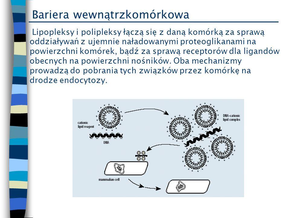 Bariera wewnątrzkomórkowa Lipopleksy i polipleksy łączą się z daną komórką za sprawą oddziaływań z ujemnie naładowanymi proteoglikanami na powierzchni