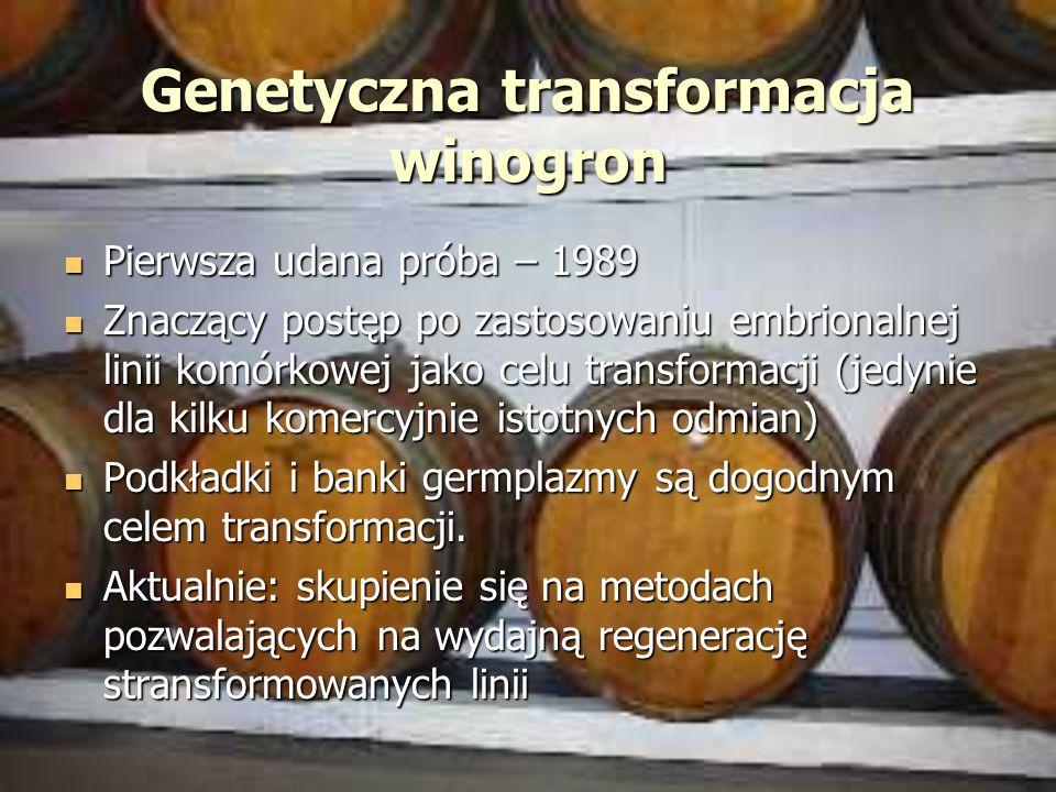 Genetyczna transformacja winogron Pierwsza udana próba – 1989 Pierwsza udana próba – 1989 Znaczący postęp po zastosowaniu embrionalnej linii komórkowe