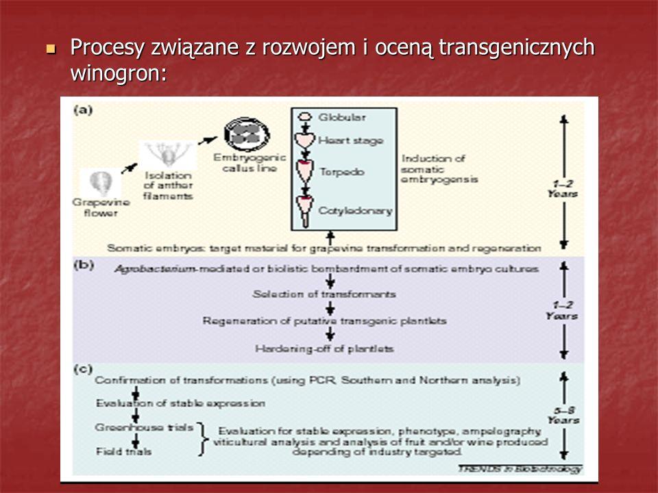 Procesy związane z rozwojem i oceną transgenicznych winogron: Procesy związane z rozwojem i oceną transgenicznych winogron: