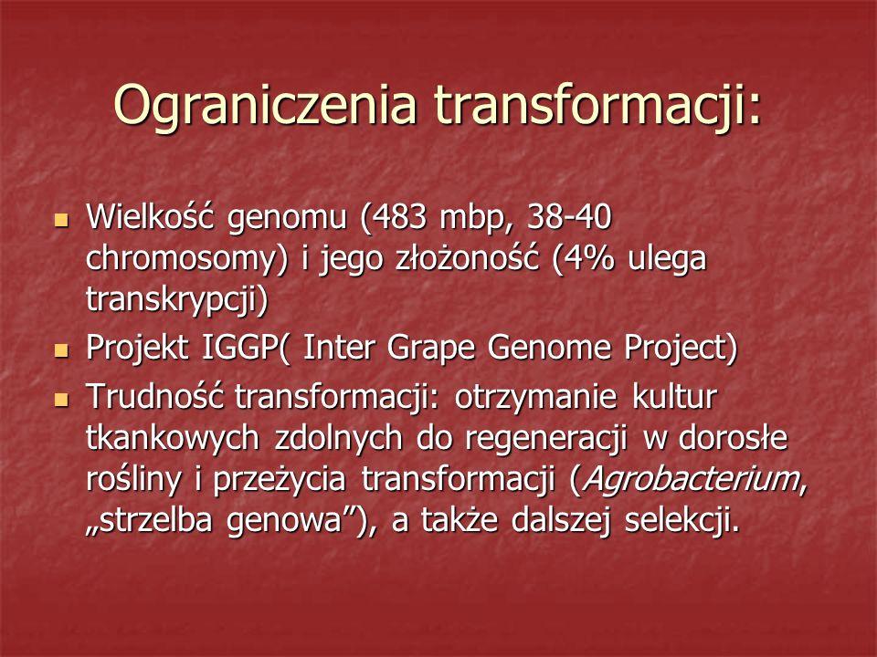 Ograniczenia transformacji: Wielkość genomu (483 mbp, 38-40 chromosomy) i jego złożoność (4% ulega transkrypcji) Wielkość genomu (483 mbp, 38-40 chrom