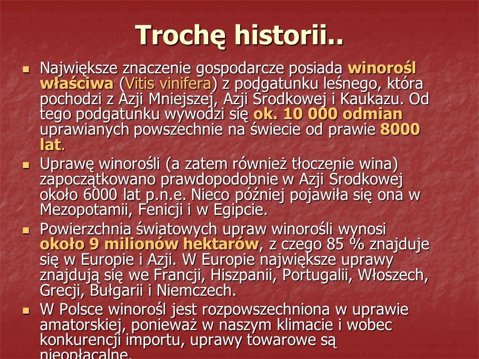 Trochę historii.. Największe znaczenie gospodarcze posiada winorośl właściwa (Vitis vinifera) z podgatunku leśnego, która pochodzi z Azji Mniejszej, A