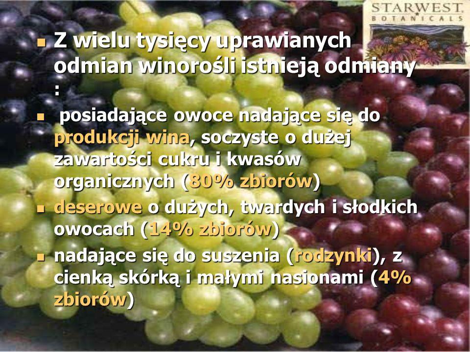 Z wielu tysięcy uprawianych odmian winorośli istnieją odmiany : Z wielu tysięcy uprawianych odmian winorośli istnieją odmiany : posiadające owoce nada