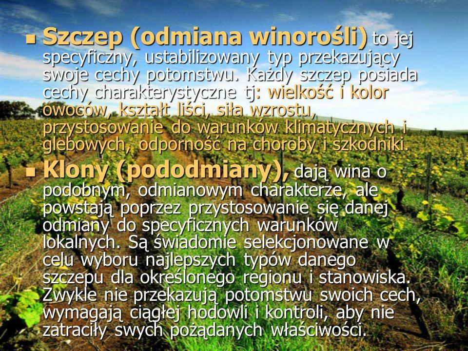 Szczep (odmiana winorośli) to jej specyficzny, ustabilizowany typ przekazujący swoje cechy potomstwu. Każdy szczep posiada cechy charakterystyczne tj: