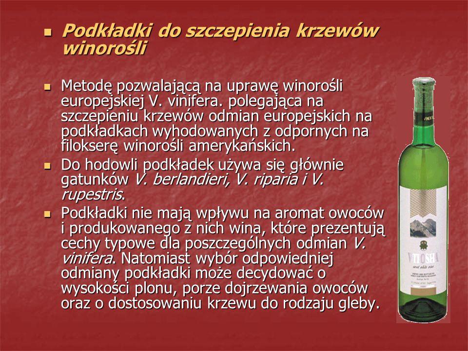 Podkładki do szczepienia krzewów winorośli Podkładki do szczepienia krzewów winorośli Metodę pozwalającą na uprawę winorośli europejskiej V. vinifera.