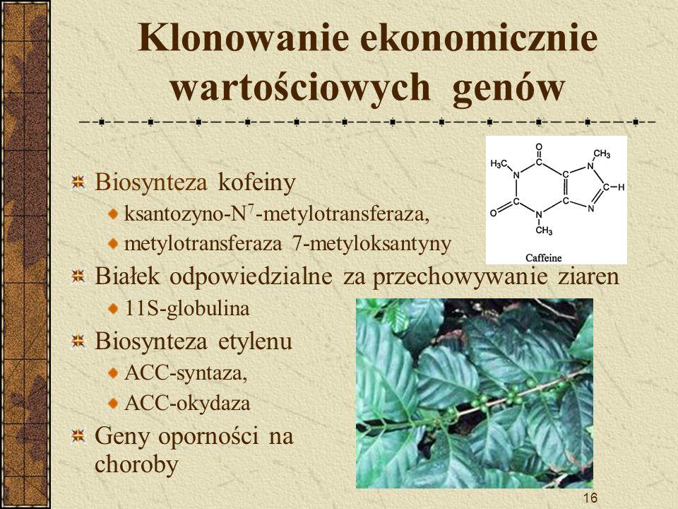 16 Klonowanie ekonomicznie wartościowych genów Biosynteza kofeiny ksantozyno-N 7 -metylotransferaza, metylotransferaza 7-metyloksantyny Białek odpowie