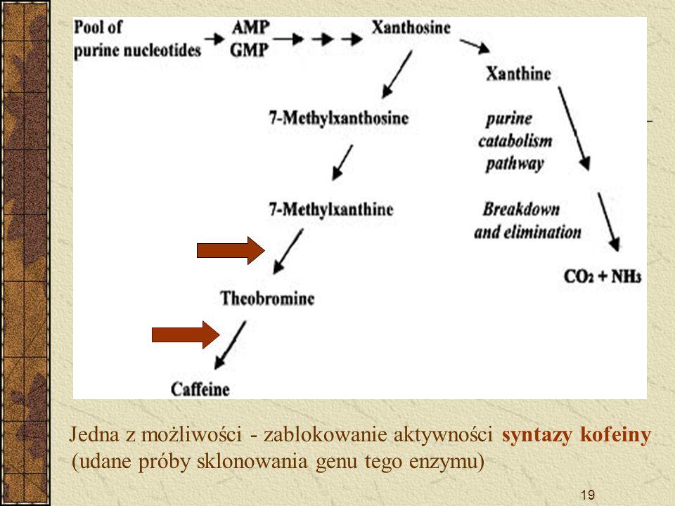 19 Jedna z możliwości - zablokowanie aktywności syntazy kofeiny (udane próby sklonowania genu tego enzymu)