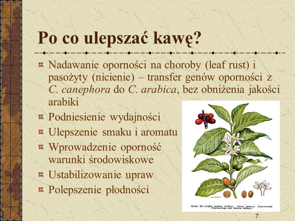 7 Po co ulepszać kawę? Nadawanie oporności na choroby (leaf rust) i pasożyty (nicienie) – transfer genów oporności z C. canephora do C. arabica, bez o